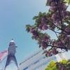 22th April : double cherry blossoms