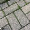 #武蔵小杉、朝清掃活動