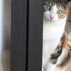 【愛猫日記】毎日アンヌさん#182