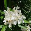 プロペラ型のお花です