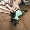 【猫】カインズの猫用品がおすすめすぎてまとめ買いしてきました。(笑)