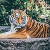 「タイガーキング」のスターが絶滅したオオカミについて語る