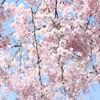 【4月8日9時から】第68回文房具朝食会@名古屋は「お花見文具会」です(^ ^)v