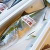 2018年7月2日 小浜漁港 お魚情報