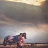 2014.【キャロット】2015年1歳募集馬 2014年度産駒