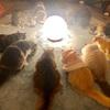 【イベントレポート】第123回ミンエリ猫カフェ貸切もふもふ人狼&ボドゲ会vol.27