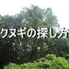 クヌギの見つけ方。栗、アベマキ、コナラとの違いを解説