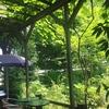 初夏の朝のカフェ フェリーチェ