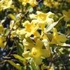 春の庭木の花