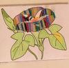 アサガオ観察日記(1)種蒔き