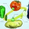 ナス科野菜の原種