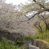 飯山白山森林公園の桜並木を歩いて長谷寺に参拝してきました