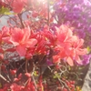 道端の花ですら綺麗に見えるのです。ってお話。