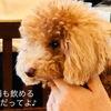 犬連れランチ 吉祥寺「八十八夜」に行ってきました!レビューです。
