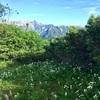 初の北アルプスで寝っ転がる、長野県 夏の蝶ヶ岳。レポPart.3(最終回)