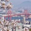 閑話休題:北九州市若松区の高塔山に桜を観てきました