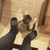 【猫画像】キジトラ猫の良さを皆さんに分かってほしいから書いていく