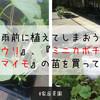【家庭菜園】梅雨前に植えてしまおう!『キュウリ』、『ミニカボチャ』、『サツマイモ』の苗を買ってきたよ!