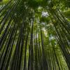 鎌倉の「報国寺」で竹林を、「杉本寺」で苔の階段を見てきました