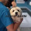 【獣医師選び】【セカンドオピニオン】病院選びの大切さ 〜安心して愛犬の命を預けるために〜