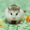 【減量】ひゃっほー明日はチートデーだ!! あえてカロリーを摂った方がいい、ストレス解消以外の理由がある??