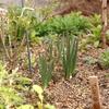 今日の庭、3月初旬