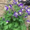 【スタッフコラム】 花が綺麗な季節