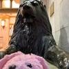 実写版ライオンキングを観てきました!コレド室町 TOHOシネマズ  プレミアムシート!