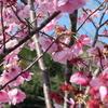 えぃじーちゃんのぶらり旅ブログ~九州編20190316~17鹿児島県南九州市