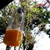 わが家の蜂対策|アシナガバチもスズメバチもポンジュースがお好き!?