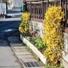 「佐久の季節便り」、杏・「平和」を、記念植樹しました。