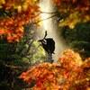 【オールドレンズ】紅葉スナップ@日比谷公園、井の頭公園【α7II, TAIR-41M 】