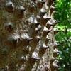やはり植物はすごい! 木が持った驚くべき6つの能力!