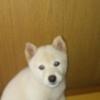 看板犬の誕生日