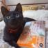 本日2月26日(金)、「ちびねこ亭の思い出ごはん 三毛猫と昨日のカレー」Kindle版発売です。