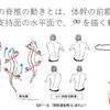 姿勢・運動制御の∞を促通する体操