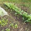 雑草堆肥と腐葉土を作ろうと計画中。趣味でやってる薪ストーブも家庭菜園に役立つかもしれないこと。