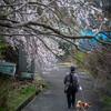 2020-03-22 お彼岸