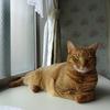 猫好きが選んだ猫好きのためのスイーツ