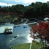 梅小路公園緑の館・・・・名残りの紅葉