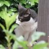 6月11日 目黒区東山から西新宿まで猫さま歩き とその情景