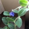 稀に見る仕事の早い花の鉢が秘める可能性に震える