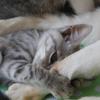 進化猫ダイちゃんと子猫たち