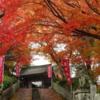 奈良の紅葉の見どころと人気は?