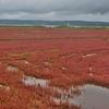「能取湖」と「能取岬」~日本一のサンゴ草群落が見れる湖とあのCMで有名になった岬!!