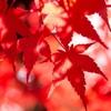 子ども雑学(10月編)紅葉、どんぐり、ハロウィン