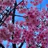 今年は桜を堪能できた