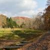 落ち葉の四季の杜公園を歩く…