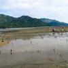 アサリ漁民となってみたーアサリ養殖は儲からないが役に立つ