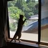 猫を室内で飼うための対策 ~網戸をペットディフェンスに取り換える~